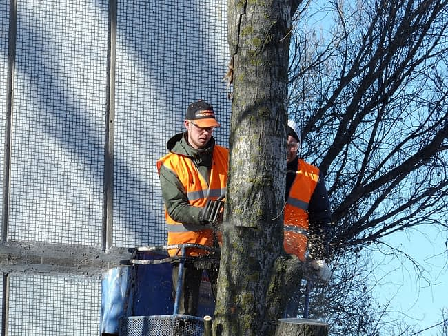 Tree Service employees